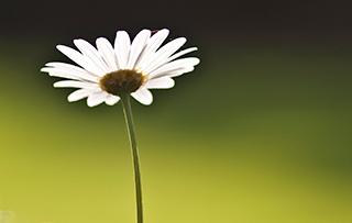 συμβουλοι γαμου ψυχολογοι θεσσαλονικη κεντρο ψυχοθεραπευτης σχεση ζευγαρι συστημικη ψυχοθεραπεια θεραπεια ζευγους αυτοεκτιμηση